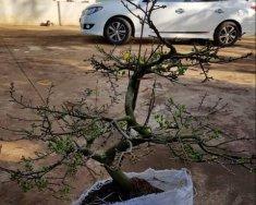 Bán Hyundai Avante đời 2012, màu trắng, giá chỉ 350 triệu giá 350 triệu tại Đắk Lắk
